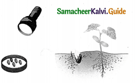 Samacheer Kalvi 9th Science Guide Chapter 19 Plant Physiology 7