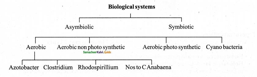 Samacheer Kalvi 11th Bio Botany Chapter 1 Living World 23