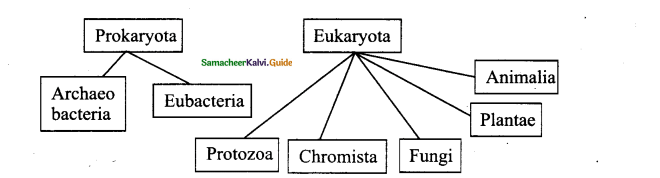 Samacheer Kalvi 11th Bio Botany Chapter 1 Living World 9