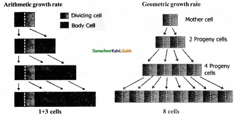 Samacheer Kalvi 11th Bio Botany Guide Chapter 15 Plant Growth and Development 6
