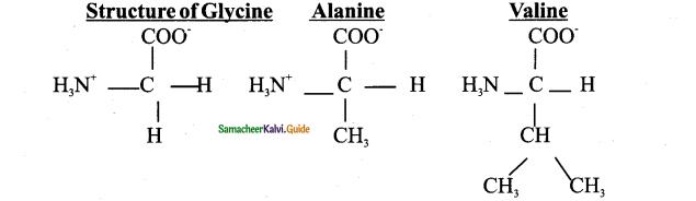 Samacheer Kalvi 11th Bio Botany Guide Chapter 8 Biomolecules 20