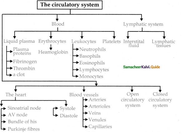 Samacheer Kalvi 11th Bio Zoology Guide Chapter 7 Body Fluids and Circulation 4