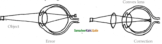 Samacheer Kalvi 11th Bio Zoology Guide Chapter 10 Neural Control and Coordination 27