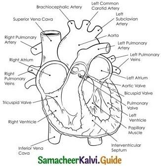Tamil Nadu 11th Biology Model Question Paper 1 image 4