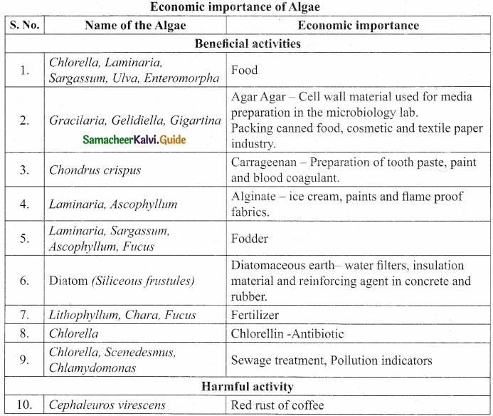 Tamil Nadu 11th Biology Model Question Paper 3 image 3