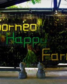 borneo happy farm wall plants