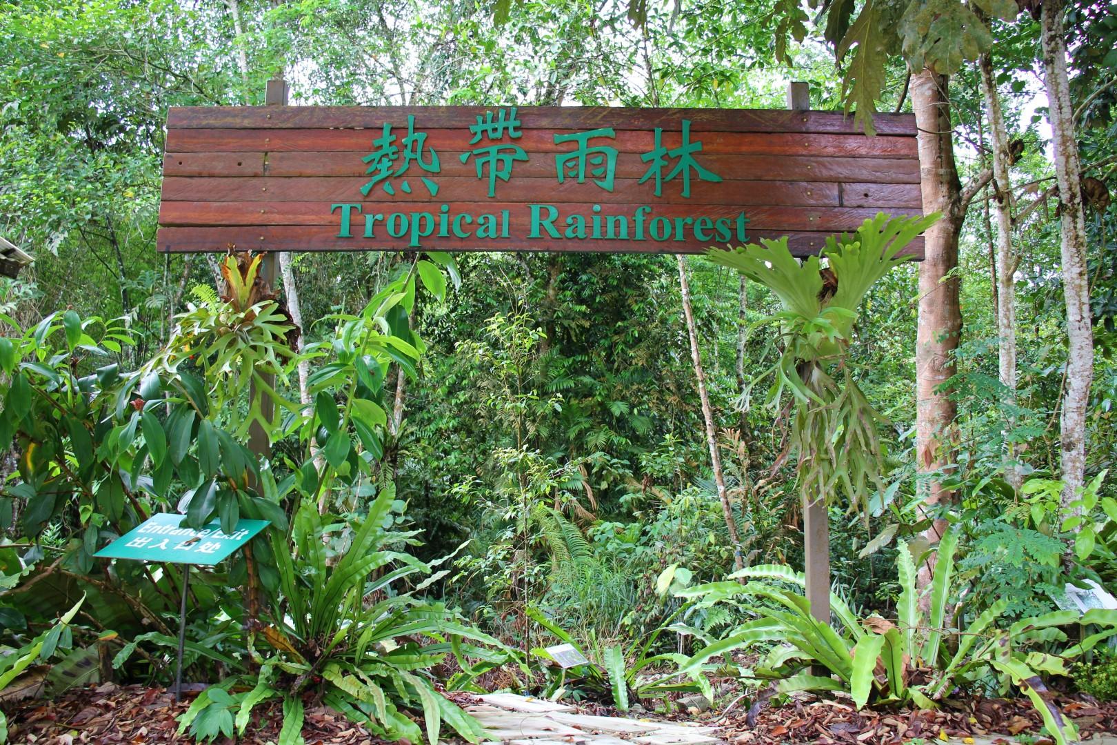 Tropical Rainforest Entrance