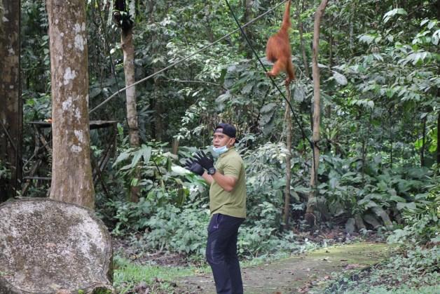 park ranger and orangutan