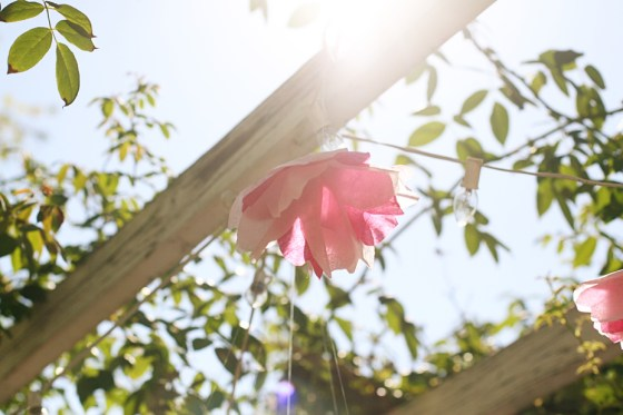 amie-cherry-blossom-bridal-shower-tissue-paper-flowers_2505
