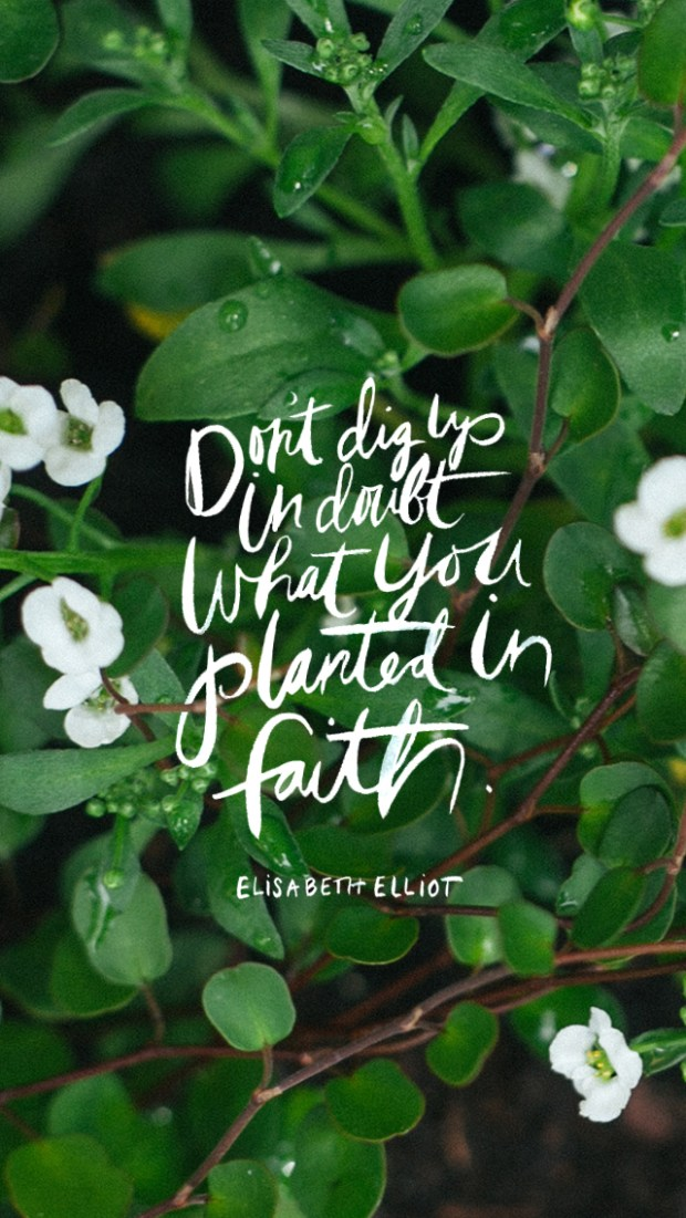 Con't dig up in doubt what you planted in faith.—Elisabeth Elliot