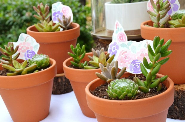 Shabby Chic Baby Shower Potted Succulent Favors 3
