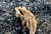 Poor Crabby