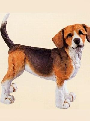 Beagle by A Breed Apart