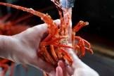 crayfish_kreef_runnybabbitcrafae