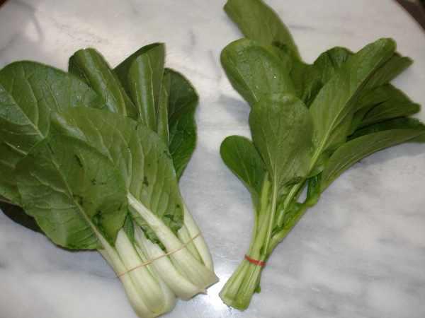 Chinese Cabbage Bok Choy Dom39s Kitchen Garden