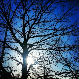 Tree, sun, and a bright blue sky