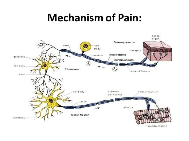 Mechanism of Pain: