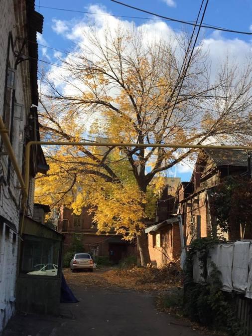 autumn-in-molodogvardeskaya