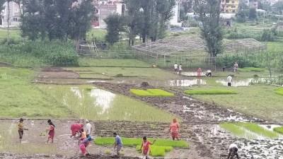 बर्खा लाग्यो काठमाडौ उपत्यकामा , फोटो फिचर