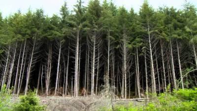 वन अतिक्रमण हटाइँदै