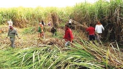Sugarcane farmers demand due payment
