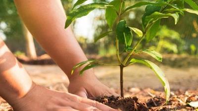 कृषकमैत्री यस्ता छन् योजना ठुलिभेरीका : एक घर एक बगैँचा