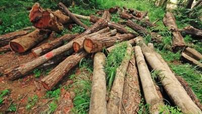 वन समूहसँगै सरकारको लगानीमा काठ उद्योग
