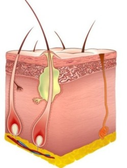 Что делать при воспалении сальной железы на лице