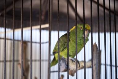 Elopement-Tamarindo-Costa-Rica-Haceinda-JJ-Samba-to-the-Sea-Photography-03