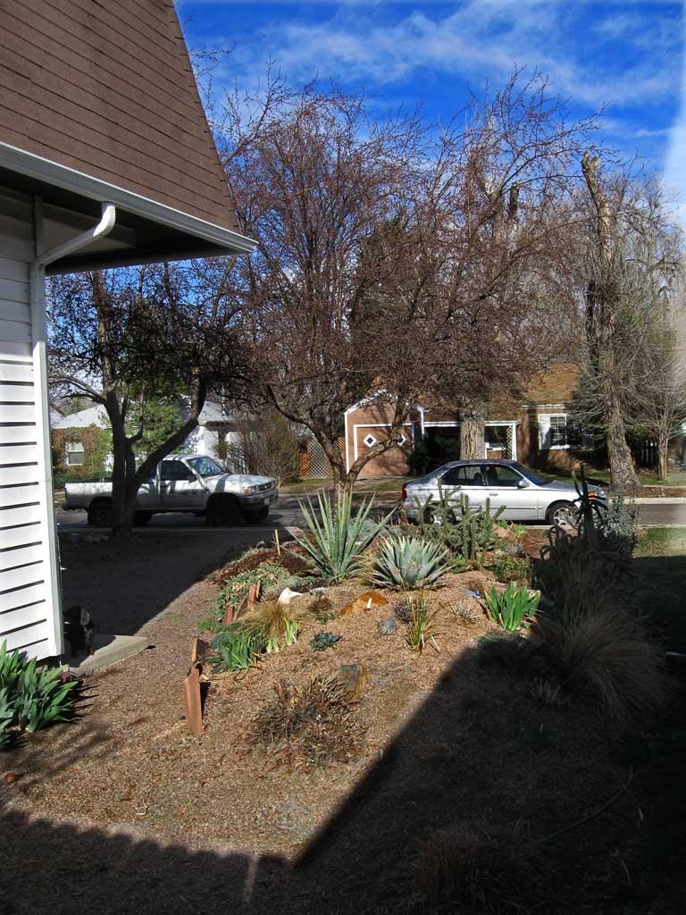 Frontyard - Wednesday afternoon