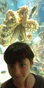 Gregor mets an octopus.