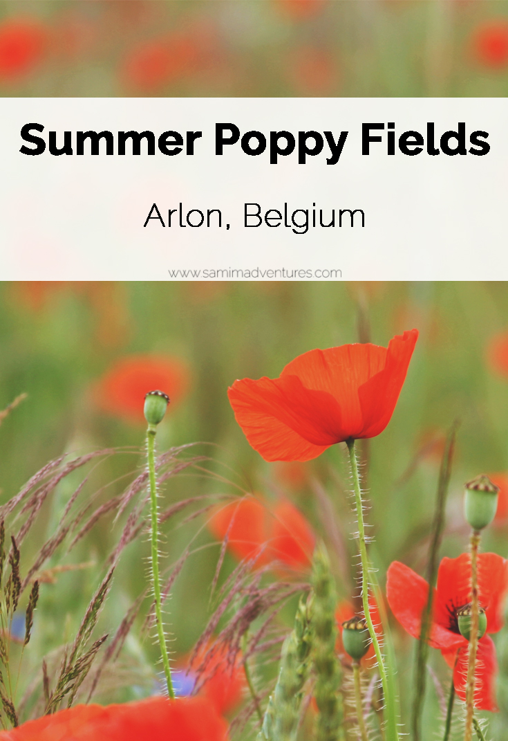 SamiM Adventures Where I'd rather be Wednesday Summer poppy field in Arlon, Belgium