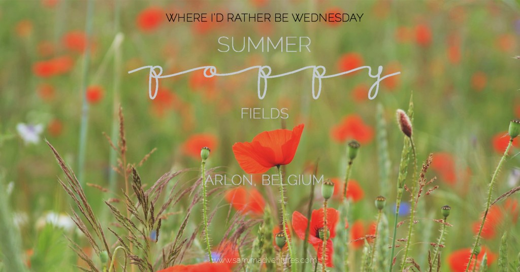 SamiM Adventures Where I'd rather be Wednesday summer poppy field in Arlon, Belgium