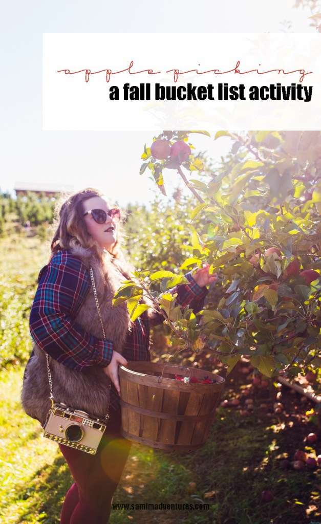 An apple picking adventure at Mercier Orchards