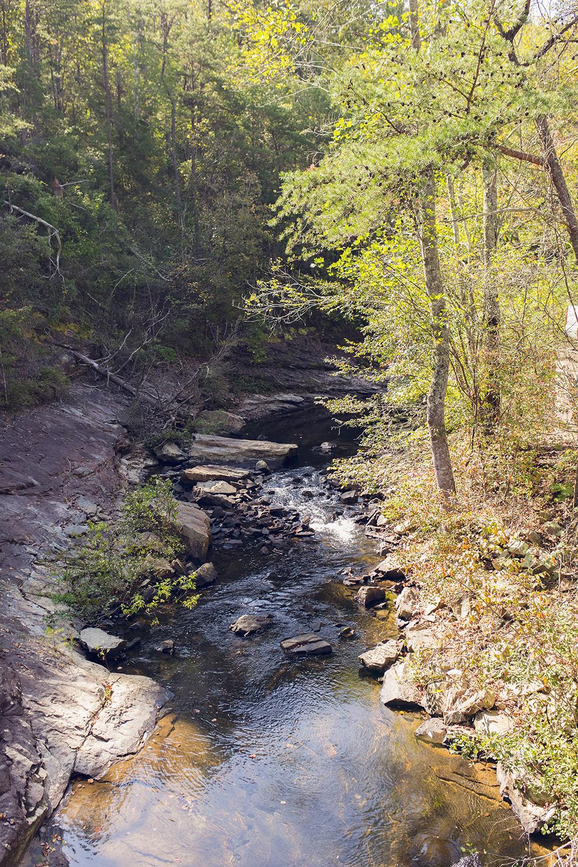 3 reasons why you should visit Lula Lake Land Trust near Chattanooga, TN!