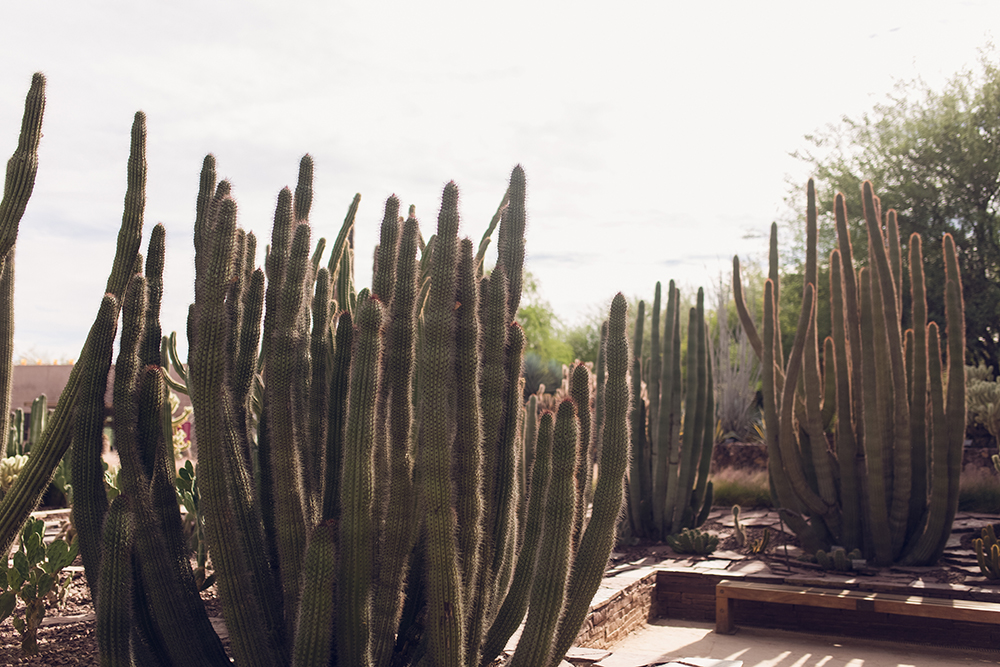 Visiting the Desert Botanical Garden in Phoenix
