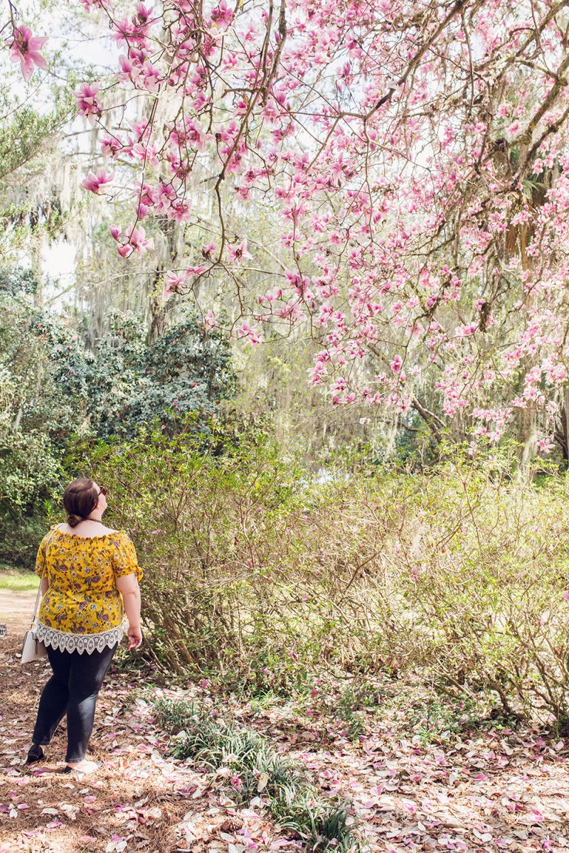 A Spring Visit to Alfred B. Maclay Gardens State Park in Tallahassee, Florida