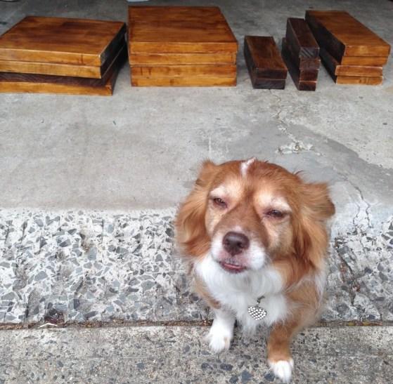 Project mascot, Angie