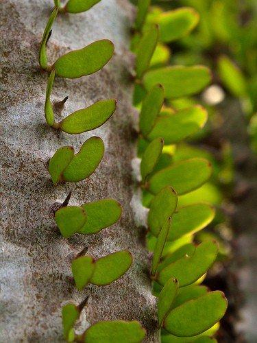 Сообщение о самых маленьких листьях растений