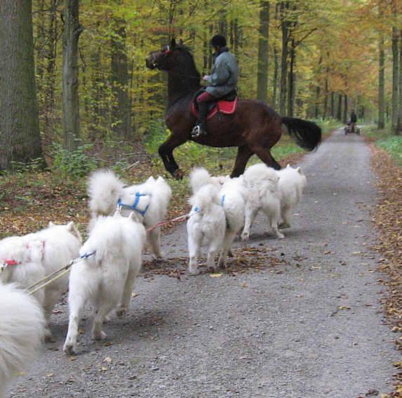 17-vorbei-an-hund-u-2-pferden