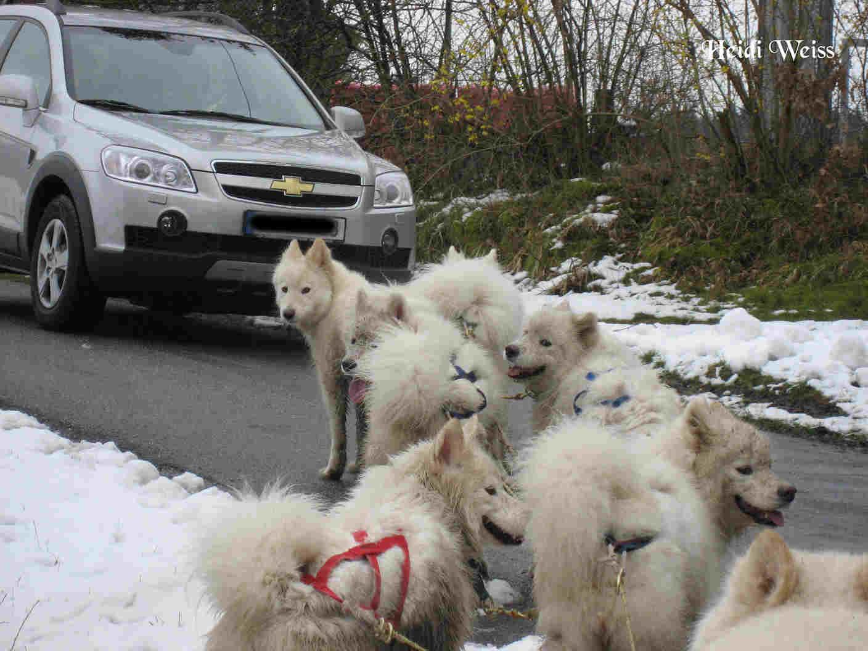 die-team-dogs