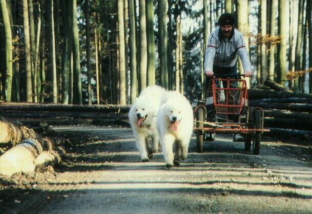 tour-mit-2-hunden