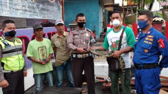 Anak Buaya yang Ditangkap Warga Kotim Telah Dilepasliarkan oleh BKSDA ke Lamandau