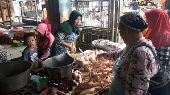 Harga Ayam Potong Capai Rp 50 Ribu Per Kilo