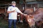Dinas Pertanian Kotim periksa 2.793 ekor hewan kurban, ini hasilnya