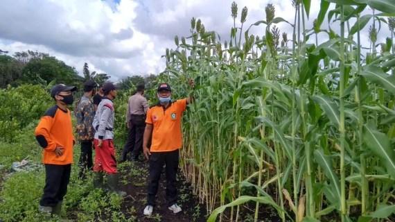 Kapolsek dan Camat Pulau Hanaut Memotifasi Petani Desa Rawa Sari