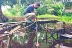 BKSDA Sampit pasang pancing tangkap buaya naik ke darat