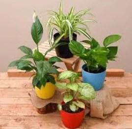 {Loot} Nursery Live - Get 4 Free Jasmine Plants For All