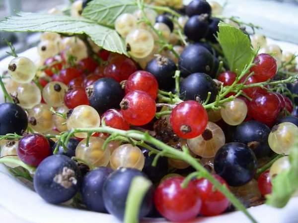Ответы@Mail.Ru: какая ягода бывает черной,красной и белой?