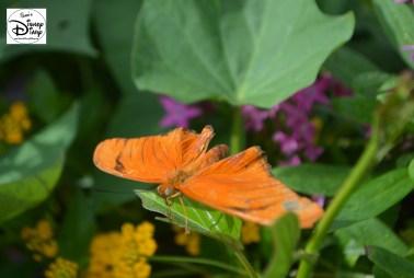 Epcot Flower and Garden Festival - Butterfly Garden